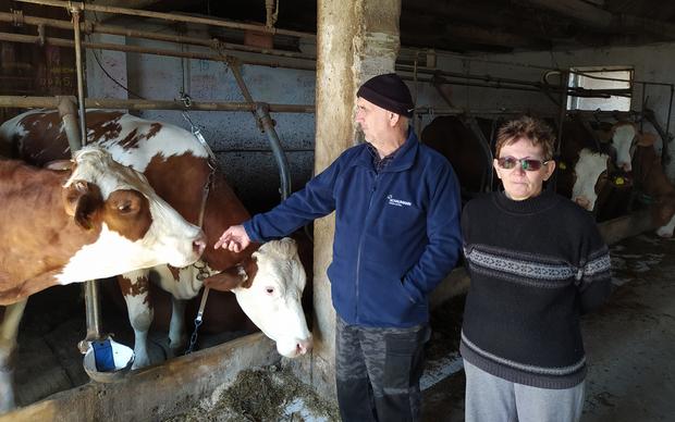 Mara i Milan Šesto imaju više od 50 grla stoke